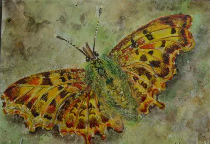 Geel bruine vlinder